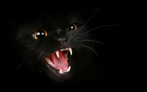 black_angry_cat_25173