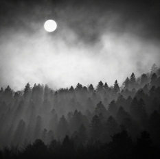 dark-foggy-forest-moon-night-sky-Favim.com-104519